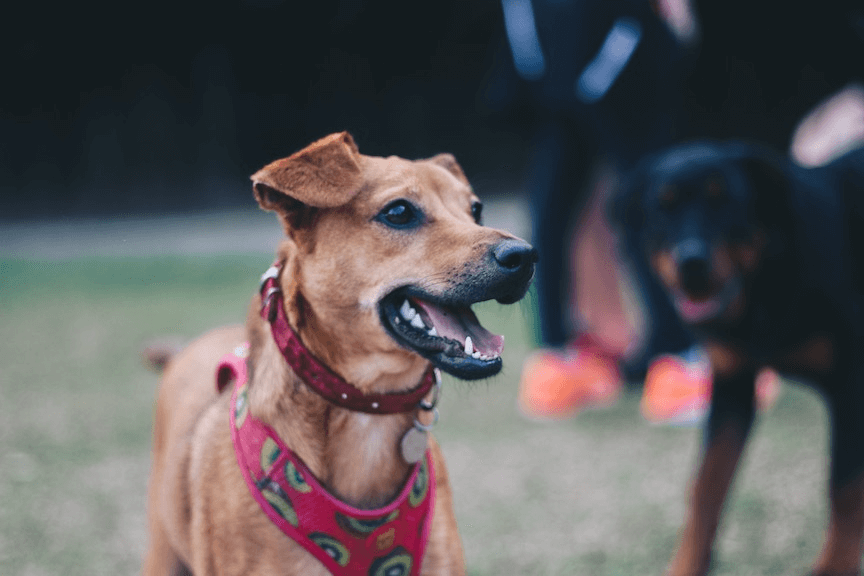 How to Build a Rewards Program in the Pet Supplies Industry