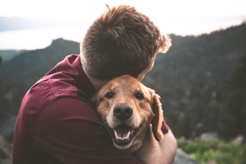 Rewards Case Study: PetSmart's Treats